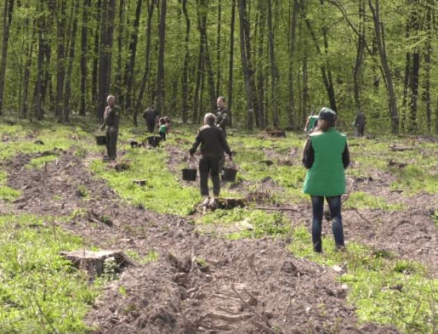 На Волині провели лісокультурну кампанію. ВІДЕО