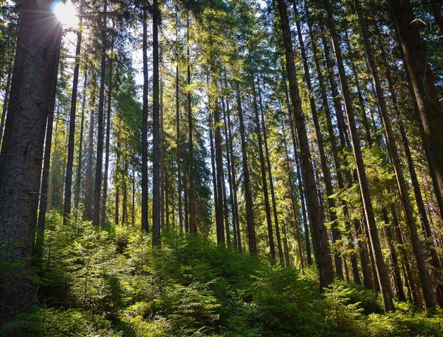 У Києві обговорили стан реформування лісового господарства. ВІДЕО