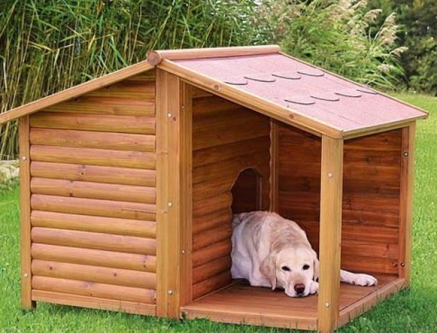 Лучани хочуть поставити в центрі міста будки для бездомних собак