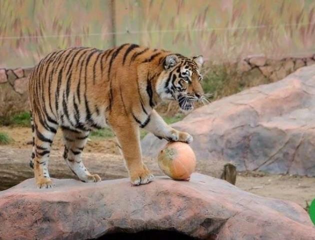 Луцький зоопарк не бере нових тварин, бо не має місця