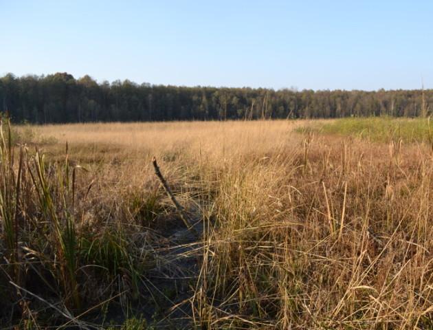 Легендарне волинське озеро заросло верболозом