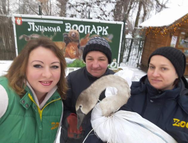 Луцький зоопарк врятував майже чотири десятки тварин