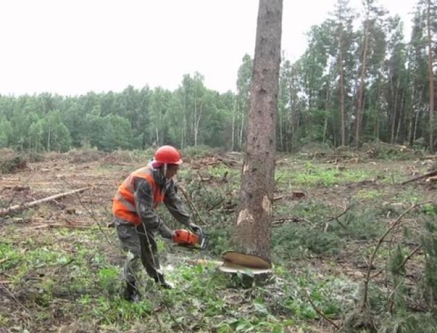 Волинянин незаконно зрубав 8 дубів та грабів загальною вартістю 54 тисячі гривень