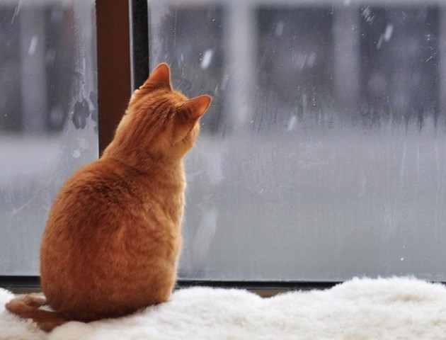 Якою буде погода у Луцьку та області 8 грудня