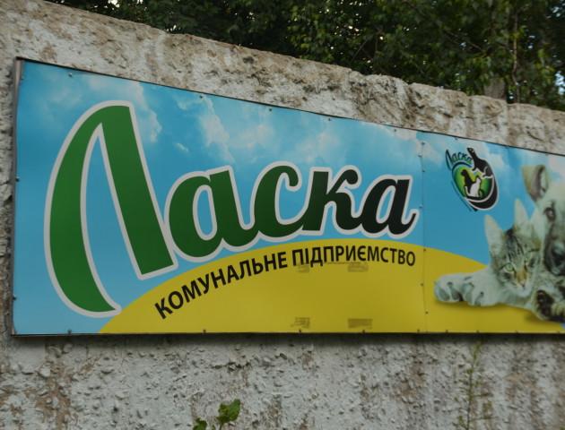 Новий директор КП «Ласка»: чи змінився притулок?