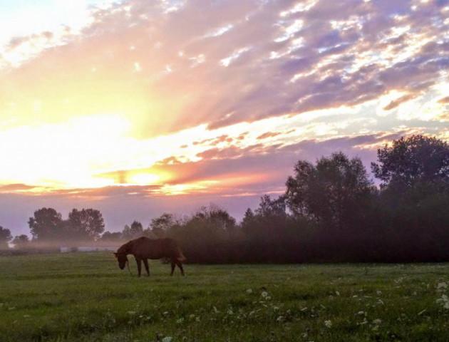 Схід сонця на Волині: ніжні фото