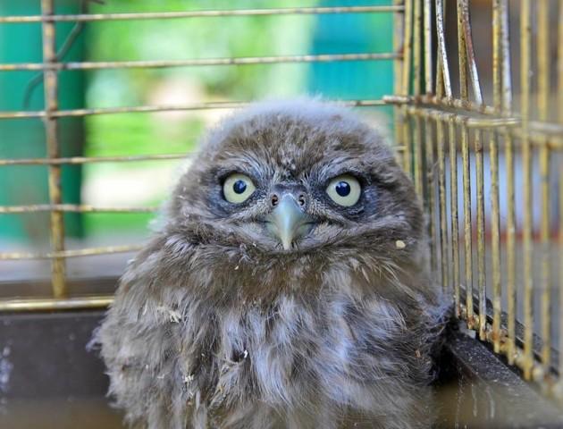 У Луцькому зоопарку показали, як «виходжують» покинутих пташат. ФОТО
