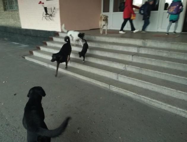 На вході волинської школи – зграя бездомних собак. ФОТО