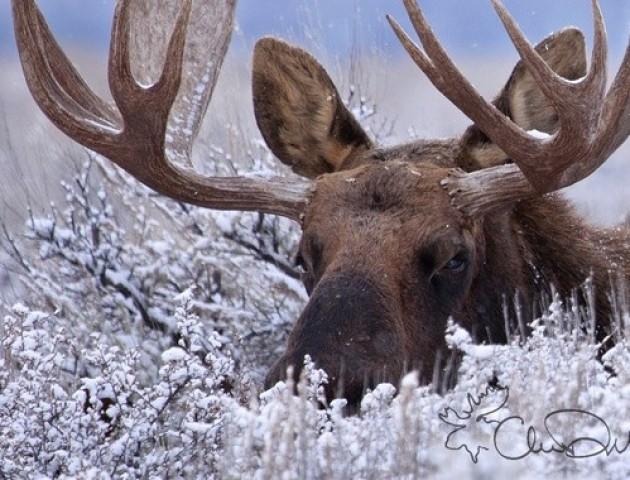 У Києві «лось» на гіроскутері чистив дороги від снігу