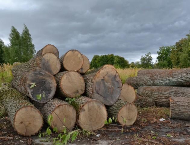 19-річний волинянин вкрав дуб за 11 тисяч гривень