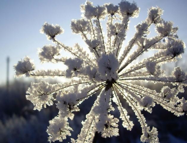 Якою буде погода у Луцьку та області 23 лютого
