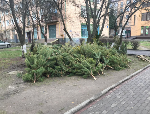 У Луцьку посеред вулиці залишили непродані сосни