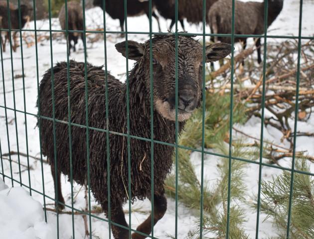 Куди подіти новорічну ялинку у Луцьку? ФОТО