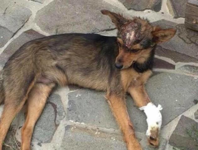 Хто у Ковелі знущається над бездомними тваринами