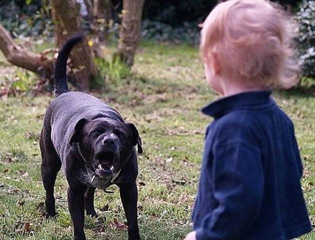 У Миколаєві бродячий собака напав на дитину та ледь не розірвав їй обличчя. ВІДЕО