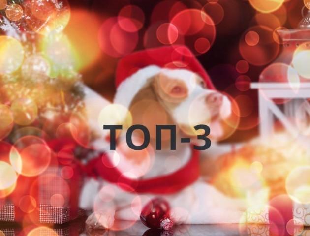 Новорічний одяг, ведуча «Орла і Решки», справлення нужди у школі: ТОП-3 новини за 11 грудня