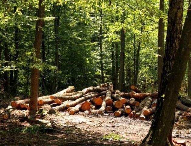 «Через ваш мораторій ми лишимось без роботи»: волинські лісівники висловили своє обурення радикалам