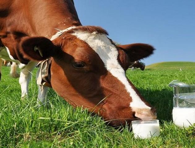 Домашні молоко та м'ясо під забороною