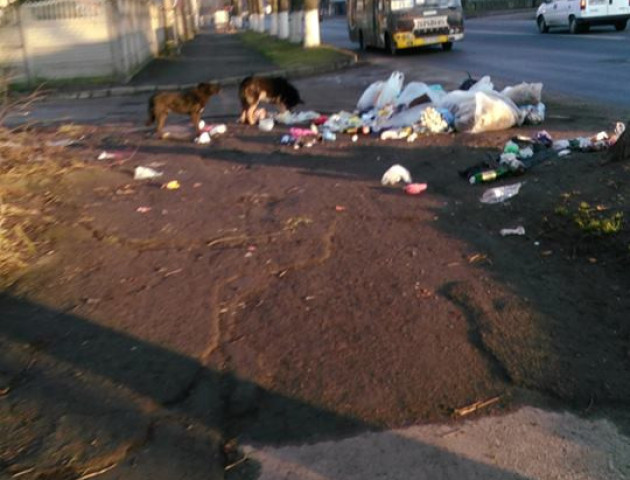 Поблизу луцької школи - гори сміття. ФОТО