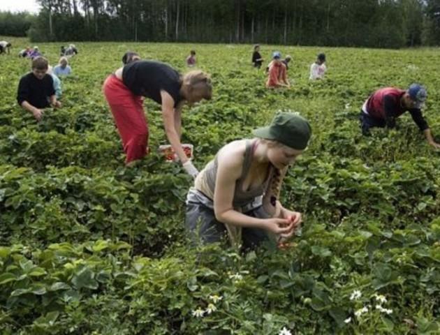 У Польщі приголомшили кількістю українських заробітчан