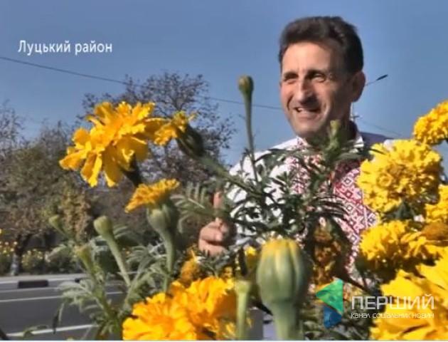 Волинянин засіяв декоративними квітами близько 600 кілометрів доріг. ВІДЕО