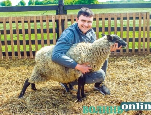 Породисті вівці від «1+1»: молодому волинянину подарували 30 тварин
