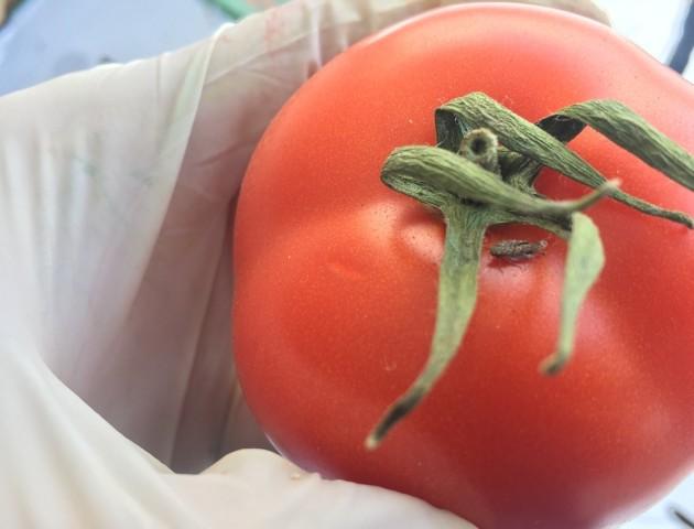 На Волині вилучили заражені помідори. ФОТО