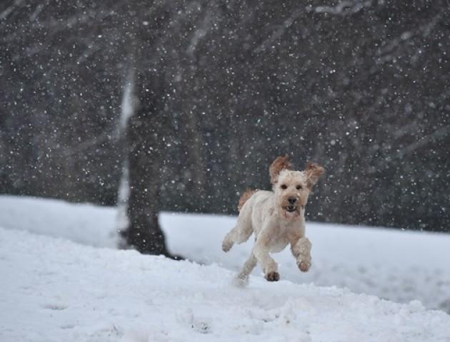 Сніг та мороз: якою буде погода у Луцьку 5 січня