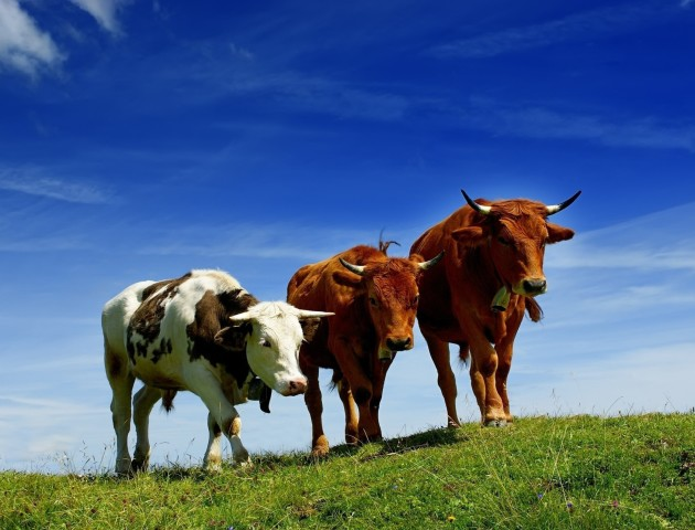 Волинські ветеринари просять з бюджету додаткові кошти