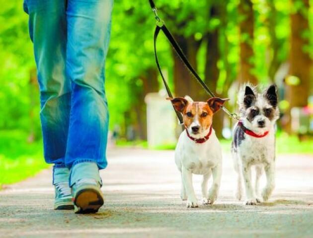 Обов'язкове світло і ванночки для миття: переглянуть вимоги до місць вигулу собак