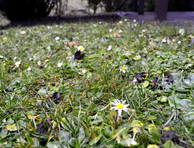 У центрі Луцька посеред зими зацвіли квіти. ФОТО