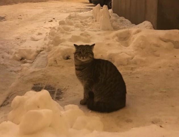 Клімкін показав кота, який прийшов «отримувати посаду в МЗС»