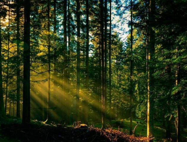 На Волині державі повернули 60 гектарів лісу вартістю 70 мільйонів гривень