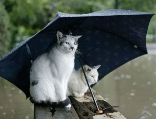 Сьогодні на Волині дощитиме