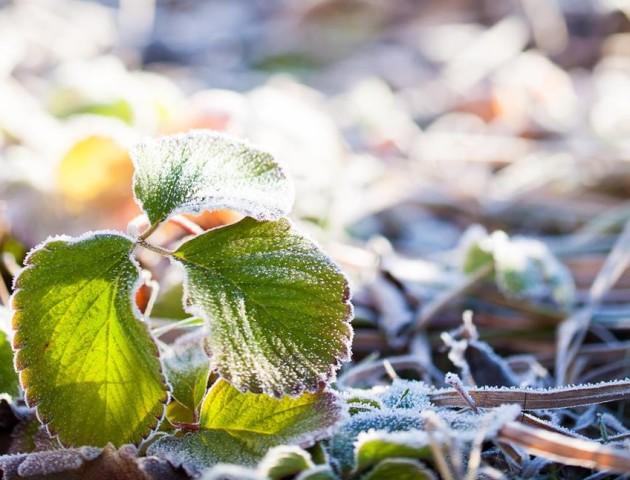 Краса морозного ранку на Волині. ФОТО