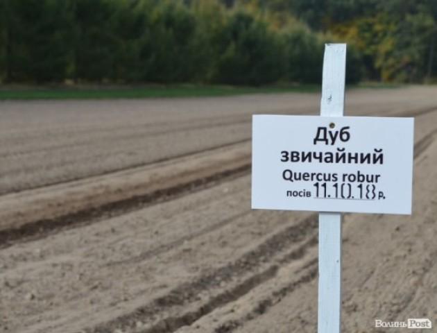 Волинські лісівники засіють дубом 16 гектарів. ФОТО
