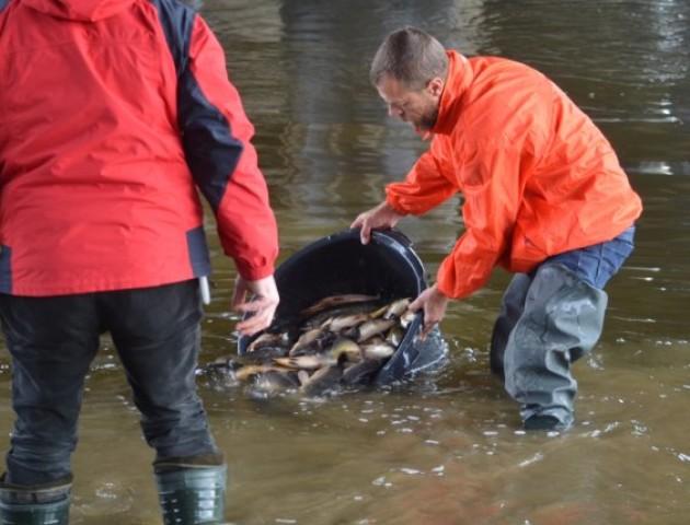 У Луцьку в Стир випустили 2 тисячі рибин. ФОТО