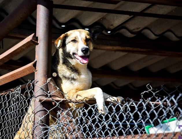 «Будемо боротися з тими, хто звозить до Луцька собак», –Ігор Поліщук новій директорці «Ласки»