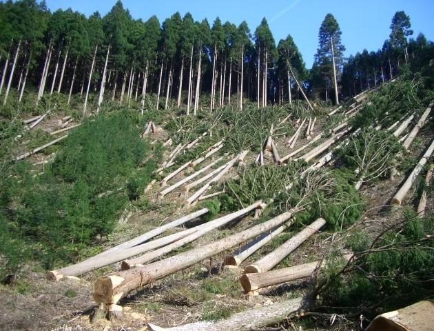 Волинські депутати просять очільників держави не обкладати ліси податками