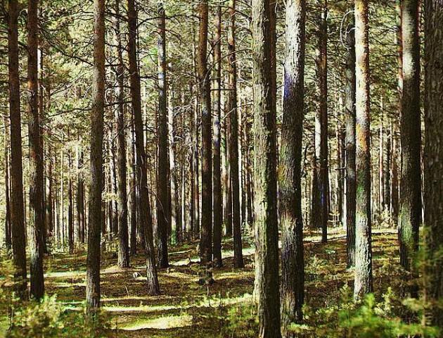 На Волині бабуся з онуком заблукали в лісі