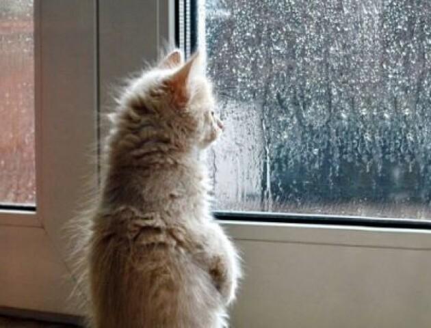 «Очікуємо морозцю». В Україні на вихідних - похолодання