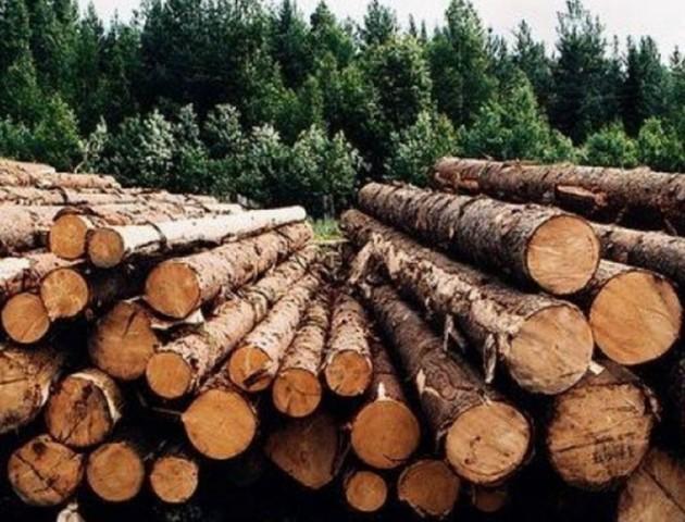 «Від радянських до європейських»: Володимир Бондар розповів про нові методи заготівлі деревини