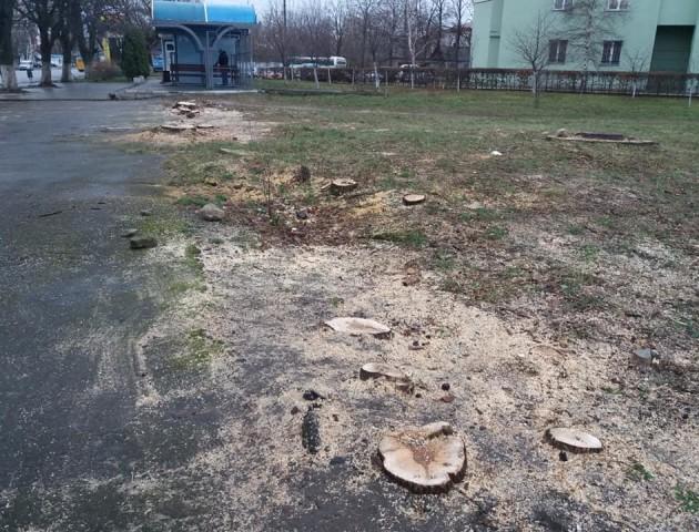 У Луцьку біля Київського майдану зрізали 18 дерев. ФОТО