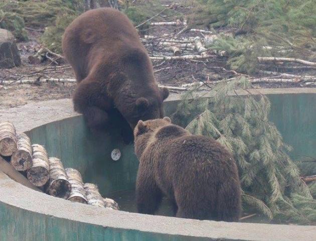 12 історій тварин, яких врятували у Луцькому зоопарку. ФОТО