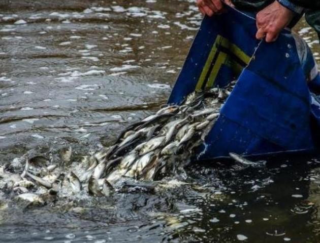 У  волинські озера випустили понад п'ять тонн риби