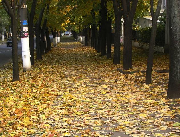 Якою буде погода у Луцьку та області 19 жовтня
