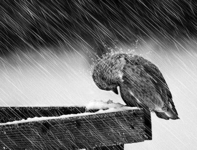 Очікуйте на дощ: погода у Луцьку та в області в середу, 26 грудня