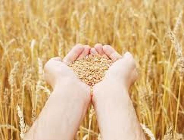 В Україні підписали меморандум для розвитку сільського господарства