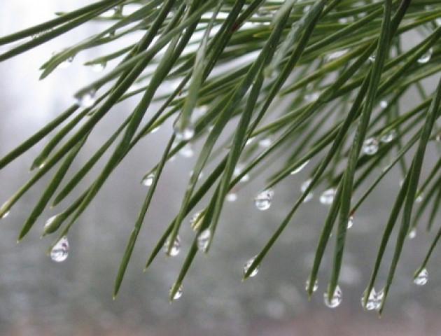 Якою буде погода у Луцьку та області 6 березня