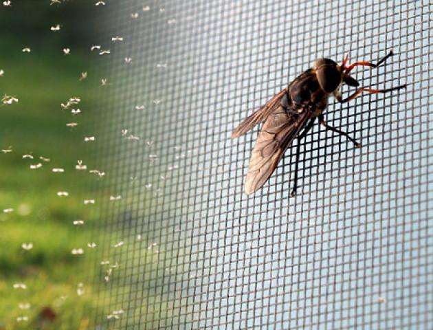Як захистити дім від комах: види антимоскітних сіток